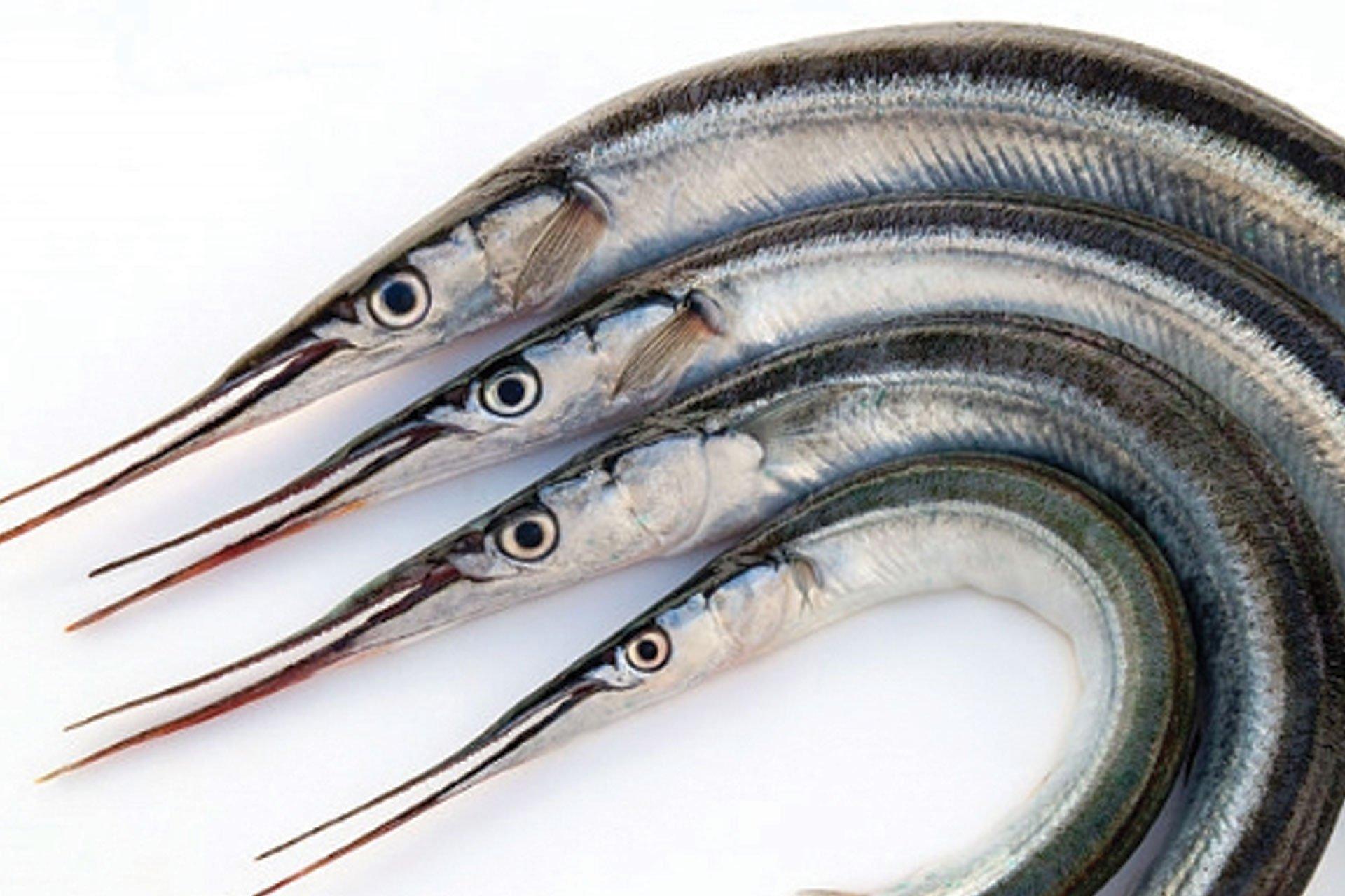 MM-pesci-web